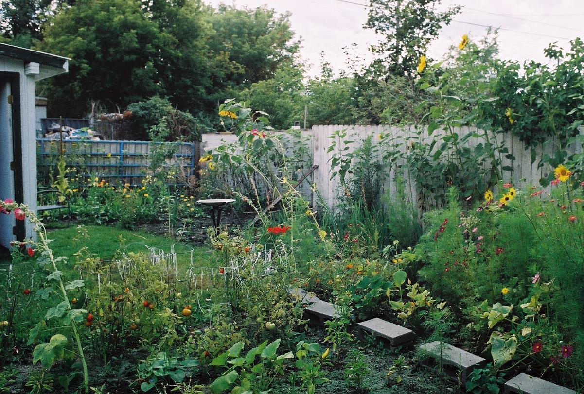 Garden 2004 for Garden pictures